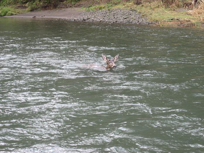 Kalama river stalker northwest fishing board for Kalama river fishing