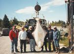 A barn-door flattie like this 250 pound halibut caught out of Ninilchik is something that would be a little more common sight on