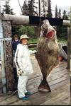 Jumbo halibut from the saltwater off of Deep Creek / Ninilchik may well tower over the angler who was lucky enough to do battle