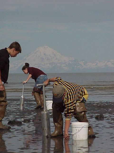 Razor clamming with Mt. Redoubt in the background.