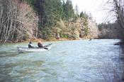 With waters at flood stage, we give chase to the kayakers in the upper Sol Duc during a whitewater run.