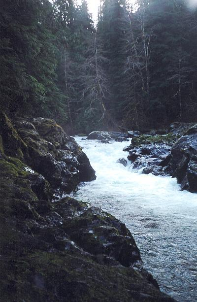 A look at the Salmon Cascades on the upper Sol Duc. During much of the year, salmon / steelhead can be viewed jumping the falls.