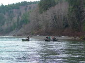 Combat on the Bogachiel. Competing boats in SRC (Snoopy Rod Classic) vie for a hatchery steelhead!