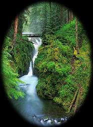 Sol Duc Falls on Washington's Olympic Peninsula