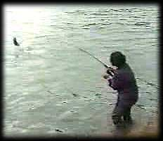 salmon fishing video
